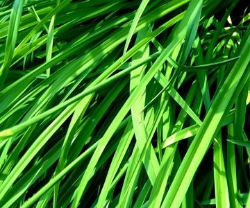 Отдушка Свежескошенная трава, Украина - 1