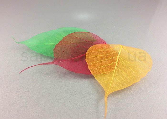 Сухоцвет - листья скелетон (разноцветные) - 1