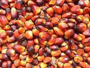 Пальмоядровое масло (РДО)